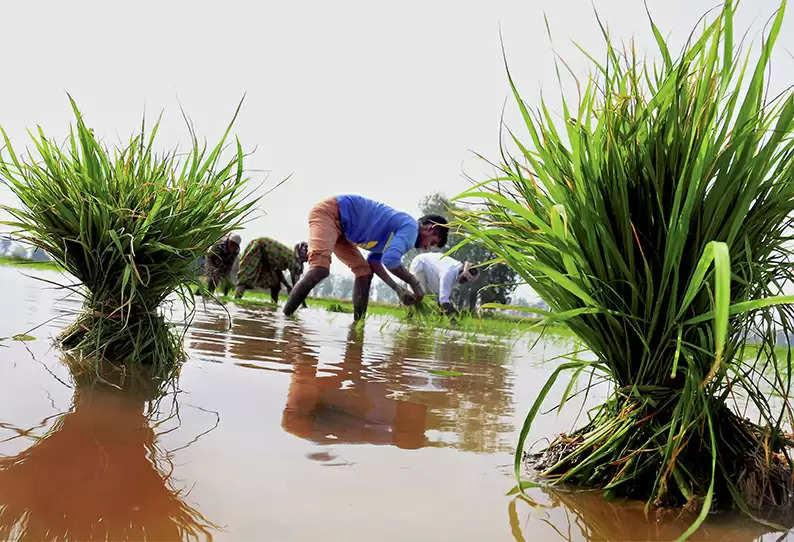 'கிசான் திட்ட முறைகேடு' 1,600 பேரின் வங்கிக் கணக்கு முடக்கம்!